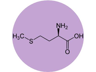methionine pour une excellente detox